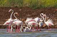 flamingos blog